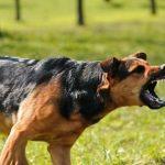 واکاوی قوانین برخورد با سگگردانی در معابر