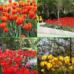 برگزاری دورههای آموزشی و مشاوره ای مجازی گل و گیاه