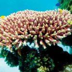 اثر مخرب گرد و غبار روی آب سنگ های مرجانی