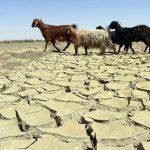 راهکارهای کاهش اثرات خشکسالی در مراتع